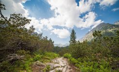 Small Path in the Middle of High Tatras